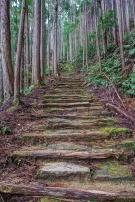 Route de pèlerinage de Kumano Kodo.