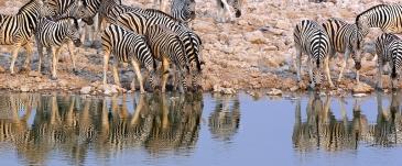 Etosha, Namibie.