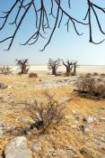 Île de Kubu dans le désert de sel du Makgadikgadi, Kalahari, Botswana.