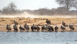 Chobe, Botswana.