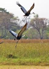 Delta de l'Okavango, Botswana.