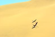 Walvis Bay, désert du Namib, Namibie.