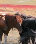 Dans la steppe mongole.
