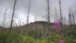Parc national des Grands-Jardins, Charlevoix.