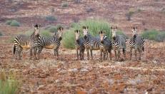 Damaraland, Namibie.