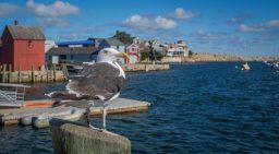 Cape Ann, Massachusetts.
